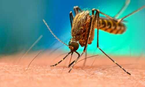 HsCRP distinguishes between Severe and Non-Severe Dengue in Children: Study