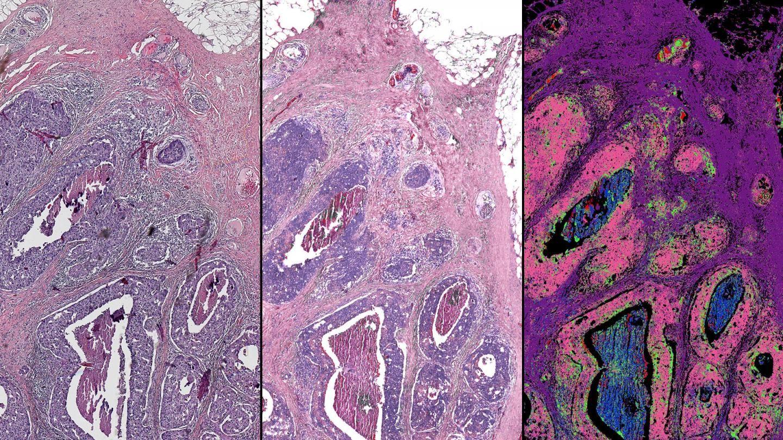 Images courtesy of Rohit Bhargava, University of Illinois