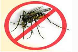 Dengue cases on decline: TN health minister