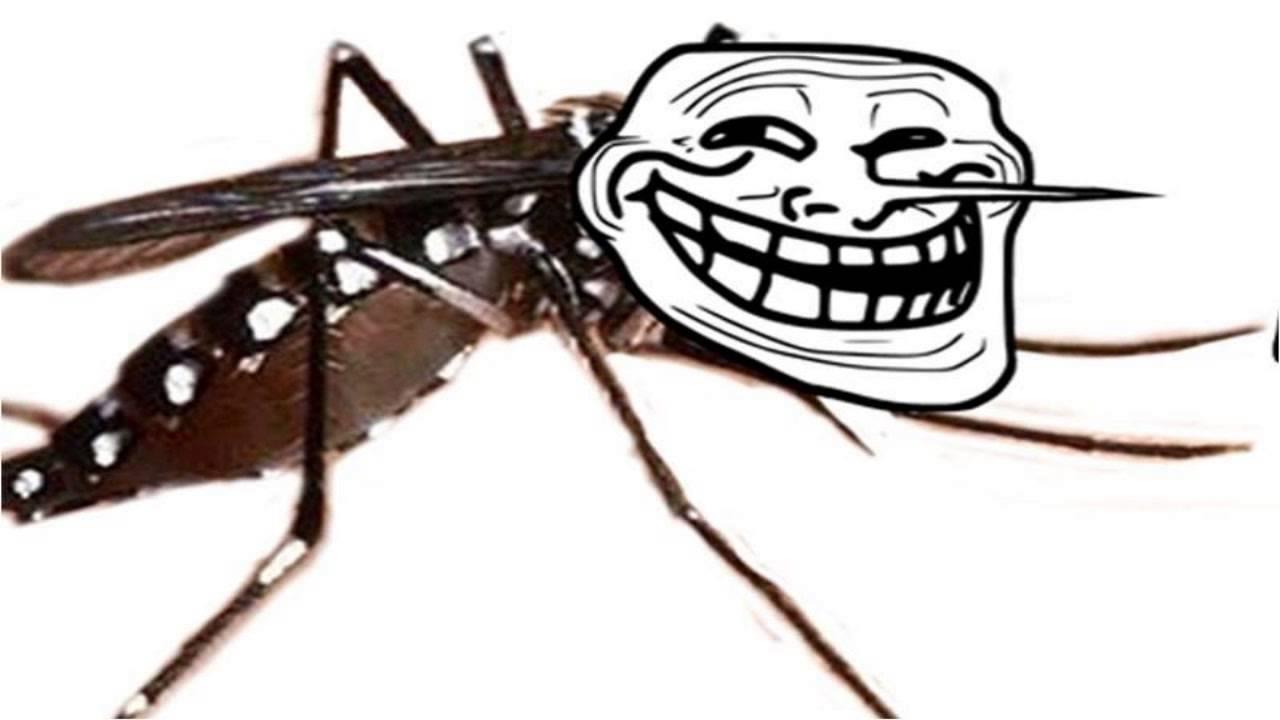 Chikungunya Vaccine Underway
