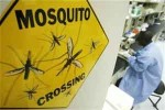 mosquito-crossing