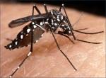 dengue rapid kit test in Kolkata