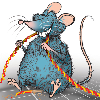 Comatose patient, allegedly bitten by rat, passes away