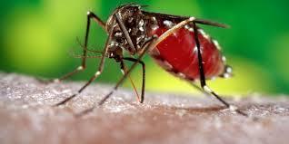 10 yr old girl in Delhi succumbs to Dengue