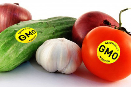 Genetically modified organisms have anti-cancer properties, says an Indian American researcher