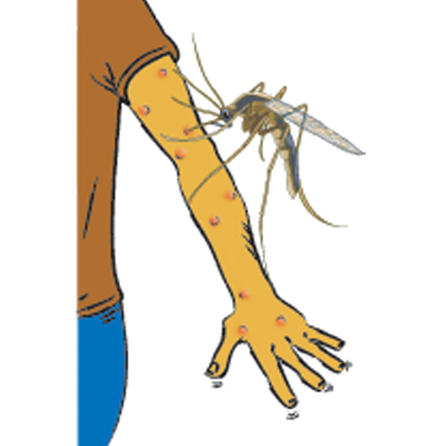 Dengue Outbreak: Congress Leader Ajay Maken Files PIL in High Court