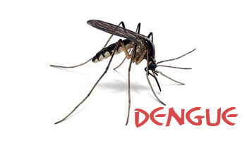 New Delhi: Nearly 120 Dengue Cases Reported in the state
