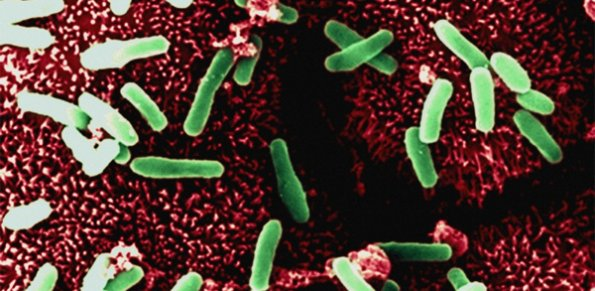 Skin microbiome can fight STD