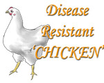 DISEASE RESISTANT CHICKEN copy