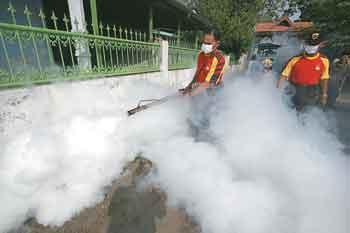 Fogging ineffective in dengue control: CSE