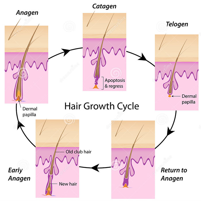 FDA-approved drugs promise new hair growth