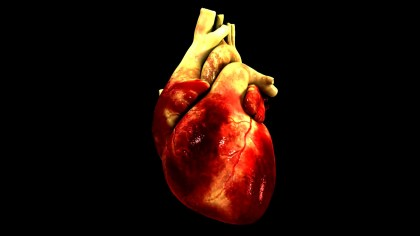 3D models of heart, arteries created