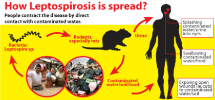 Affordable test kit for leptospirosis to be launched