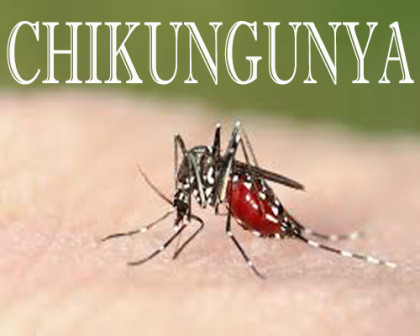 Chikungunya May Cause Fatal Brain Infection: Study