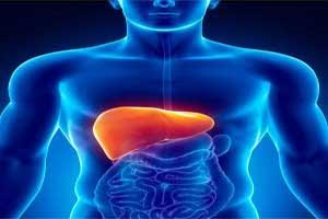 Effective therapies for liver damage come closer