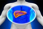 3d-printing-liver1