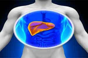 Bengaluru-based firm says 3D printed liver tissue developed