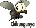 chikungunya01