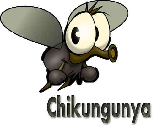 New Delhi: Chikungunya on the rise