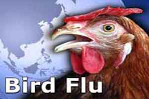 Taking all steps to prevent bird flu: Delhi minister