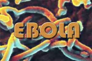 Antibodies of Ebola virus have been found out