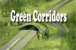 New Delhi: Green corridors save six lives