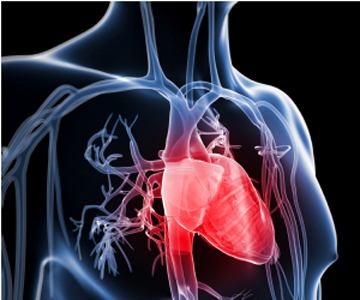 Two key proteins that control heart growth identified