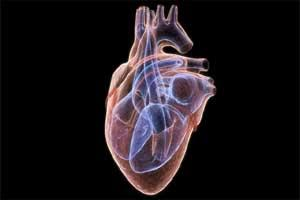 How heart grows and adapts to high blood pressure