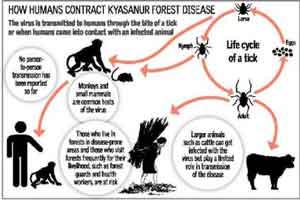 Goa records seventh monkey disease death