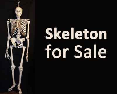 Sting Operation unearths Human skeletons being sold for Rs 8000 at Medical College