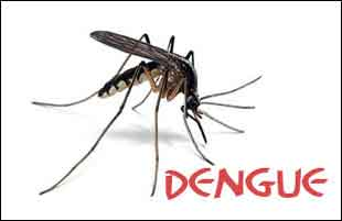 Delhi: Dengue cases rise to 2,146