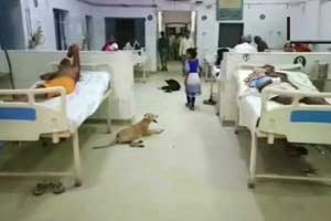 UP: Dog Menace at Govt Healthcare Facility