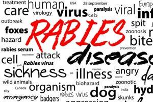 Suspecting rabies exposure, Seek medical help: Study
