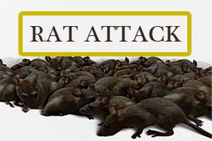 MSHRC directs BMC Hospital to Pay 2 lakh to Each Patient for Rat Attack