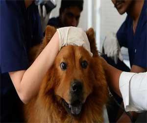 Delhi gets its first 24-7 Veterinary Hospital