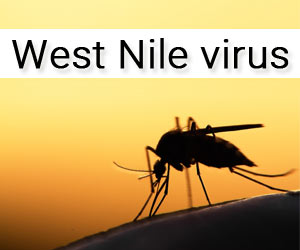 West Nile Virus: Samples of crows, Mosquitoes Test Negative