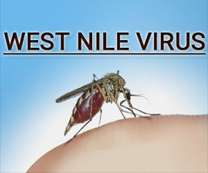 West Nile virus effects 7 year old in Kerala, Know about the Disease